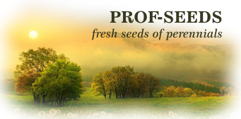 PROF-SEEDS / ONLINE STORE
